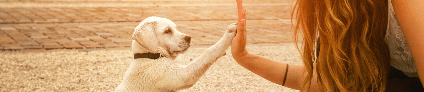 contact us hero dog puppy large